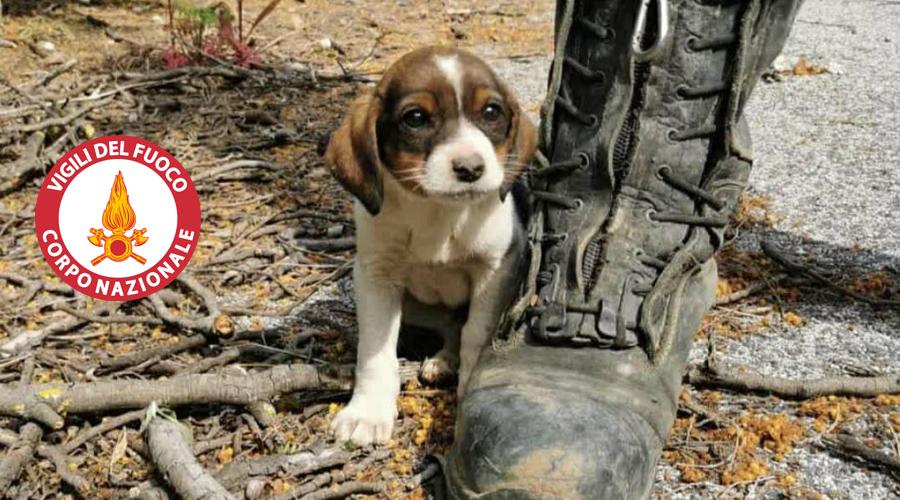 Scivola in un tombino: cucciolo salvato dai Vigili del Fuoco di Cerveteri