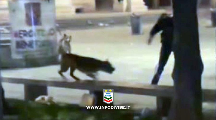Milano: gli aizzano contro pitbull, carabiniere spara a cane e arresta rapinatore