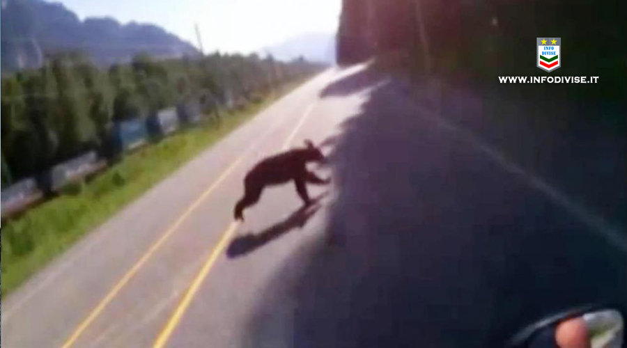 Val di Non: con lo scooter contro un orso, ferito un carabiniere